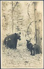 625. Black Bear and Cubs.